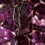 Caesarstone Quartz Puro 8551-Viola